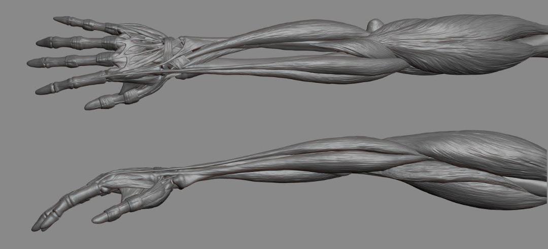 Modello del braccio