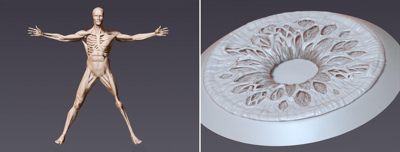 Modelli dell'Uomo vitruviano e dell'occhio